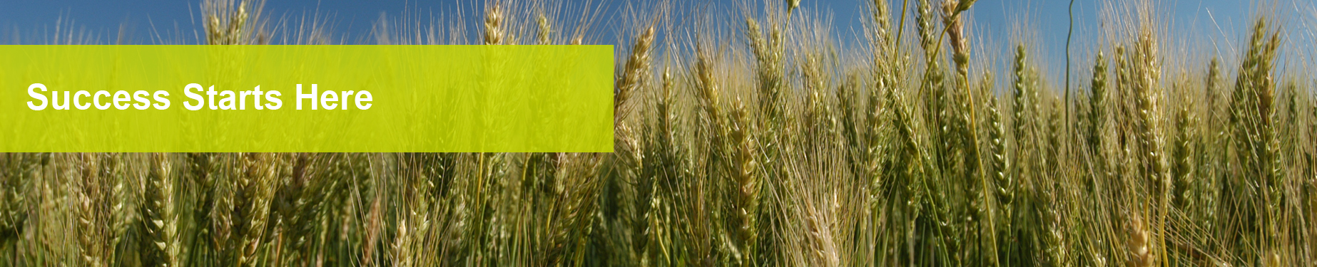seedheaderwheat